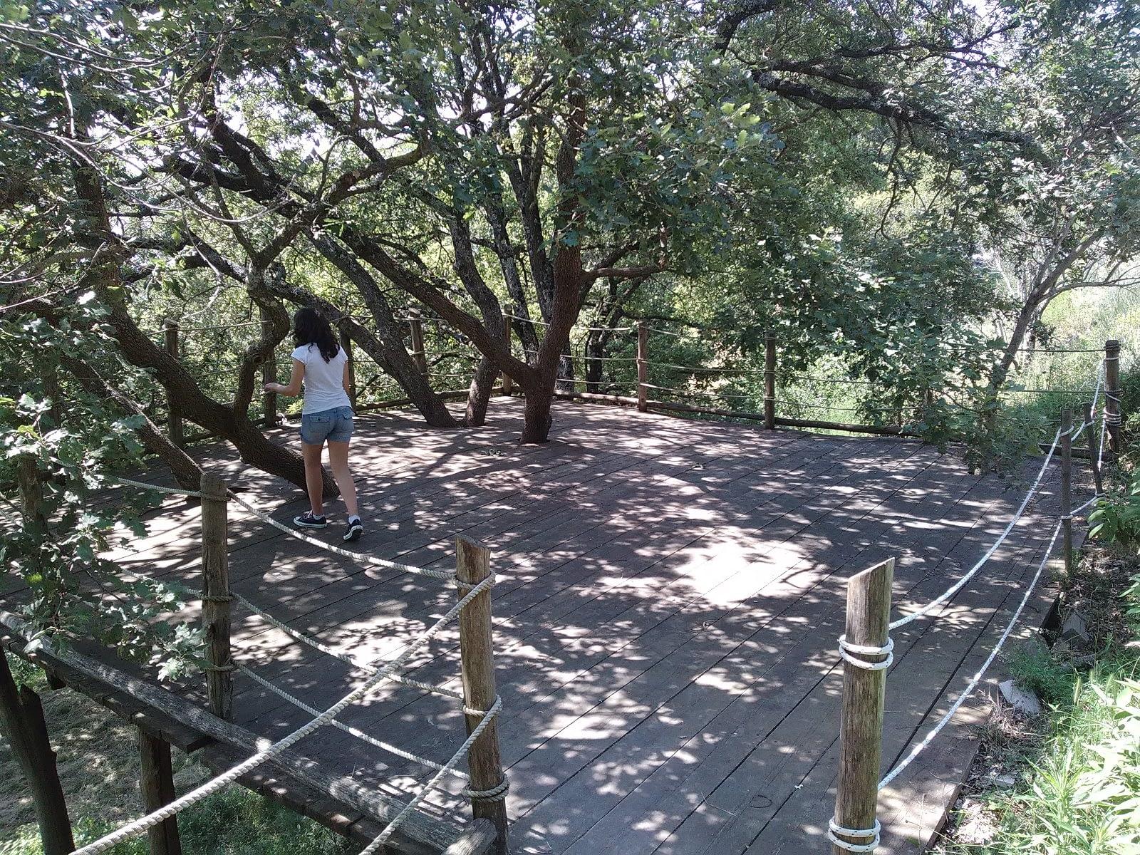 La piattaforma tra gli alberi